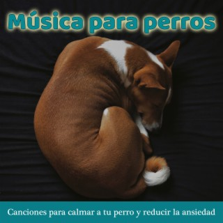 Música para Perros: Canciones para Calmar a Tu Perro y Reducir la Ansiedad - Boomplay