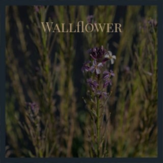 Wallflower - Boomplay