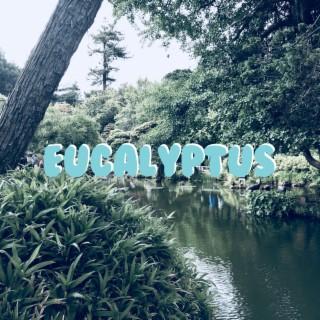 Eucalyptus - Boomplay